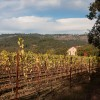 Napa Valley or the beauty of autmn